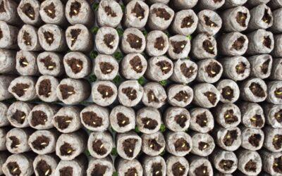Innovaciones en la producción de plántulas de previvero en sustratos inertes
